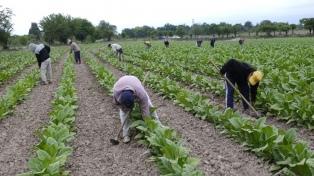 """Tabacaleros reiteran el pedido de """"flexibilizar la actividad"""" en defensa de los puestos de trabajo"""