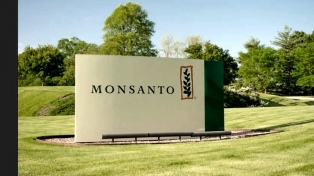 Aumentan las demandas contra Bayer en Estados Unidos por el glifosato