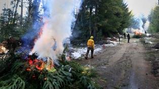 Luego del temporal, despejan árboles caídos en el tendido eléctrico de Villa La Angostura