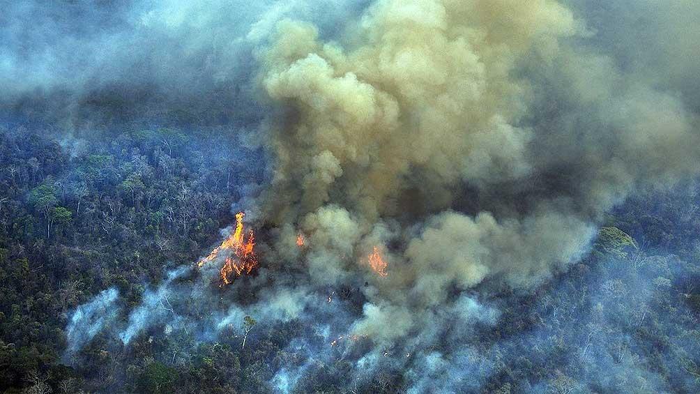 Los datos trascendieron gracias al reporte del sistema de relevamiento de deforestación en tiempo real (DETER).