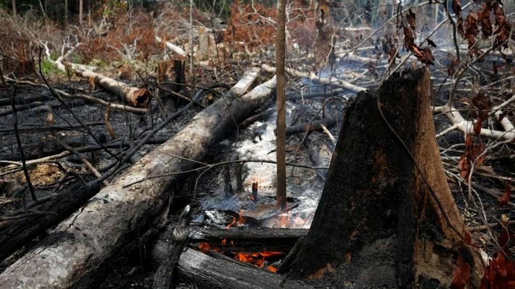 Las quemas para preparar la tierra estaban prohibidas desde julio pasado