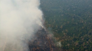 Los incendios en la Amazonia brasileña provocan cientos de hospitalizaciones