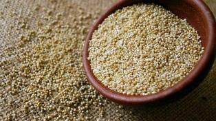 Tras la huella de los huarpes, el INTA San Juan promueve el cultivo de quinua