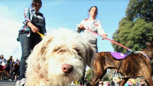 La Ciudad realiza una nueva jornada de adopción de mascotas