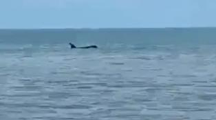 Apareció una orca a pocos metros de la playa del balneario de Monte Hermoso