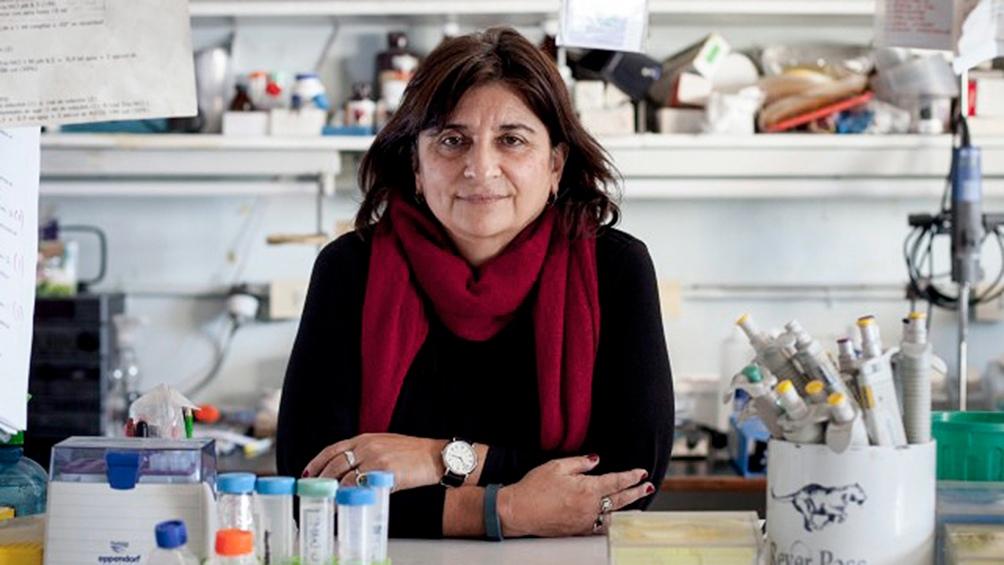 Ana Franchi, presidenta del Conicet.