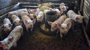 Productores porcinos destacan el proyecto de inversión chino