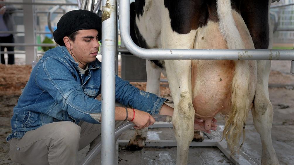 La cadena lechera argentina posee casi 180.000 puestos de trabajo