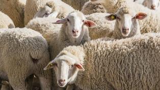 China abrió su mercado a la carne ovina patagónica de la Argentina