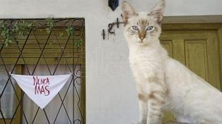 Ventanas y balcones se llenaron de pañuelos blancos en el Día de la Memoria