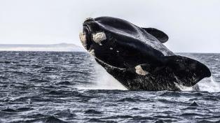 Buscan que el Agujero Azul sea un santuario para proteger la biodiversidad marina