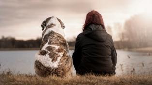Día del Animal: entre el amor a las mascotas y el cuidado a la fauna silvestre