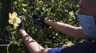 Agricultura Familiar entregó semillas a productores florícolas del Gran Buenos Aires