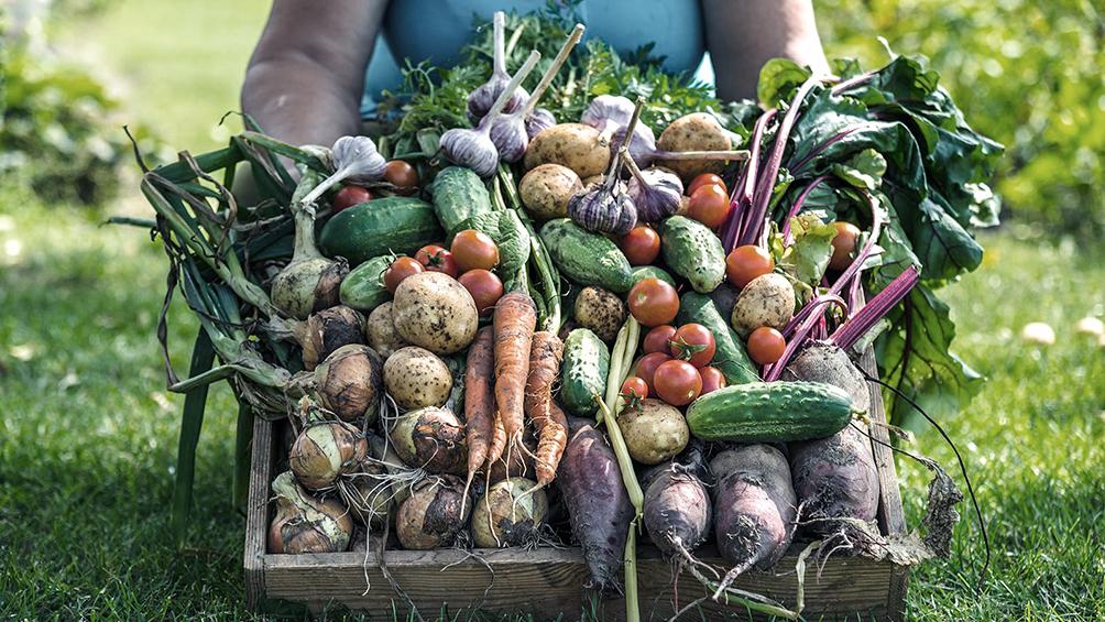 Presos bonaerenses donaron 140 kilos de verduras cosechadas en un penal a comedores