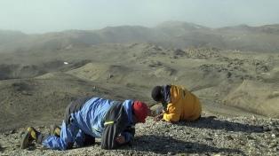 Investigadores argentinos y suecos hallaron el primer anfibio fósil en la Antártida