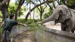 Comenzará el traslado de la elefanta Mara a un santuario de Brasil
