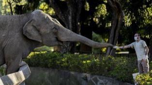 Tras 25 años de cautiverio, la elefanta Mara partió hacia el Santuario de Brasil
