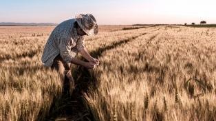 Destacan el alza del cultivo del trigo y el maíz en la región núcleo en los últimos años