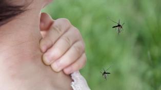 Ya se recuperó más del 80% de los pacientes con dengue en Tucumán