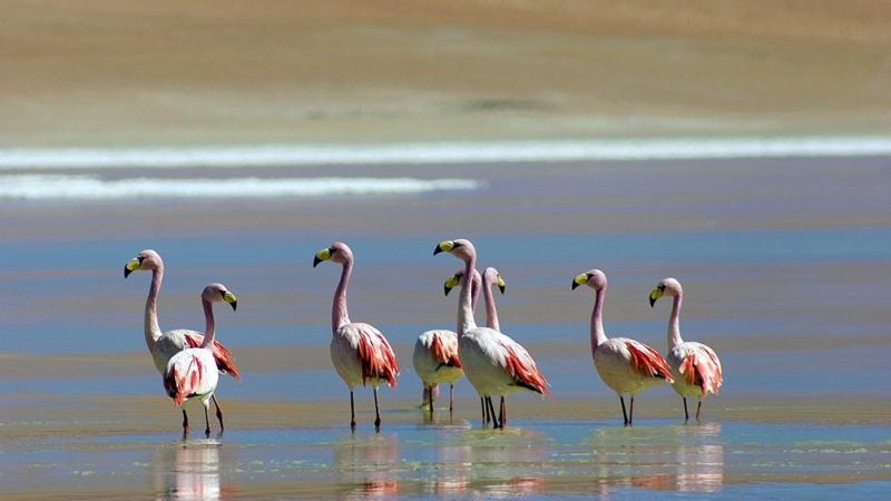 La observación de aves será uno de los productos de más desarrollo en Salta tras el coronavirus