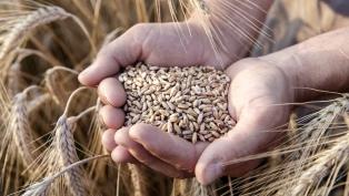 Prevén una cosecha récord de trigo y descartan factores de incertidumbre