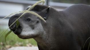 Sin público y con menos cuidadores, los zoológicos y parques del país esperan que pase la pandemia