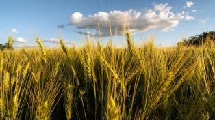 Siembra de trigo cerró con 6,5 millones de hectáreas, 100 mil menos que el año anterior