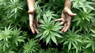 Una localidad cordobesa desarrollará el cultivo comunitario y emitirá permisos a privados