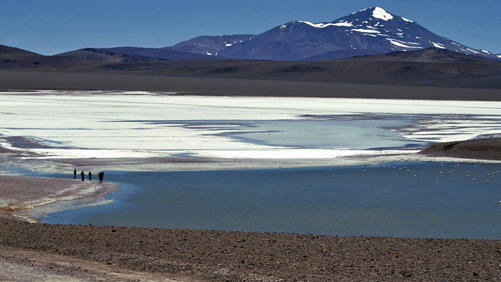 La Laguna Brava alberga aves migratorias y fauna de altura, como vicuñas y zorros andinos