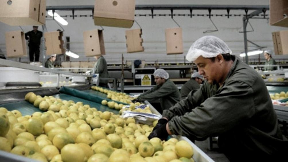 Pese a que se advirtió la enfermedad en embarques de limones y en cinco partidas de naranjas producidas en provincias del Noroeste, la Unión Europea decidió extender la prohibición a los cítricos producidos en toda la Argentina.