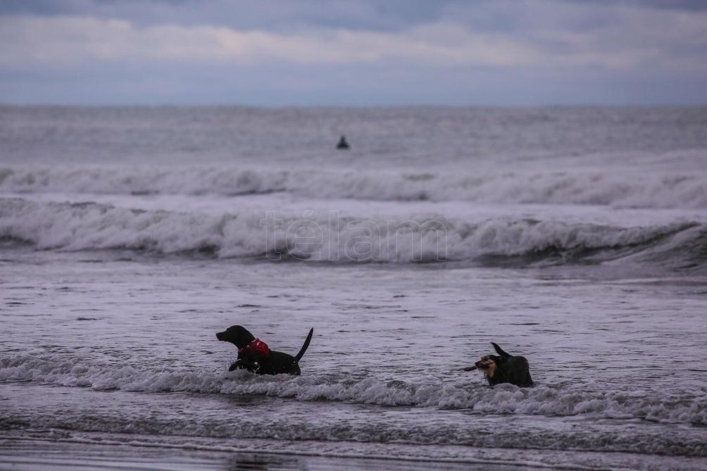 """""""El surf cumple con todos los requisitos necesarios para su apertura"""", afimaron de la Asociación de Surf Argentina. Foto: Diego Izquierdo (Télam)"""