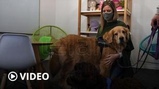 """Presentaron a Brownie, el segundo ejemplar del programa """"Perros de Terapia para Asistencia Judicial"""""""