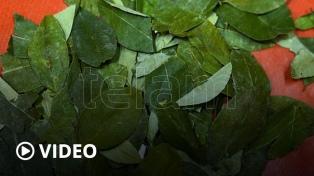 La pandemia disparó el precio de la hoja de coca y miles de trabajadores se quedan sin ese insumo