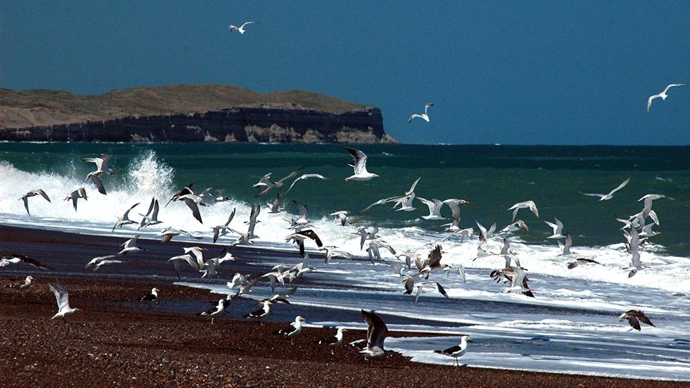 Las aves, uno de los principales atractivos de la fauna de la zona.