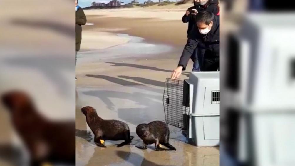 Los cinco animales habían ingresado al delta del río Paraná.