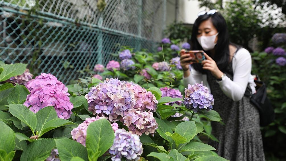 Autoridades de prefecturas dijeron que algunos hospitales estaban colapsando