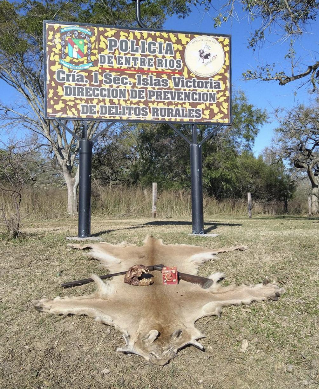 """La policía secuestró """"un cráneo de un animal de la especie Puma Argentino ´Concolor Cabrerae´"""""""