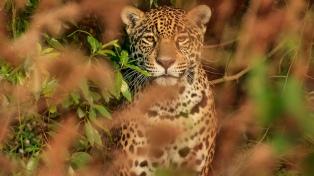 Reintroducen fauna extinguida en el Iberá con fines ambientales y para el turismo pospandemia