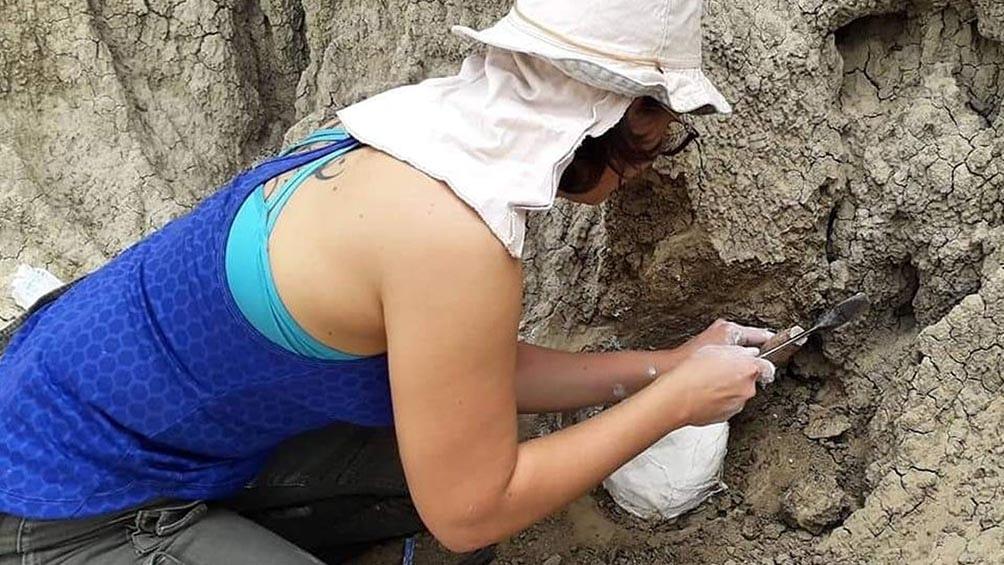 Los restos encontrados fueron trasladaddos a la capital correntina para su limpieza, restauración y acondicionamiento.