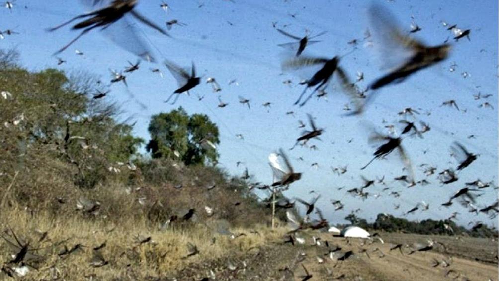 """El SENASA """"trabaja con los productores y las provincias, a los que avisa antes de que una plaga ingrese"""""""