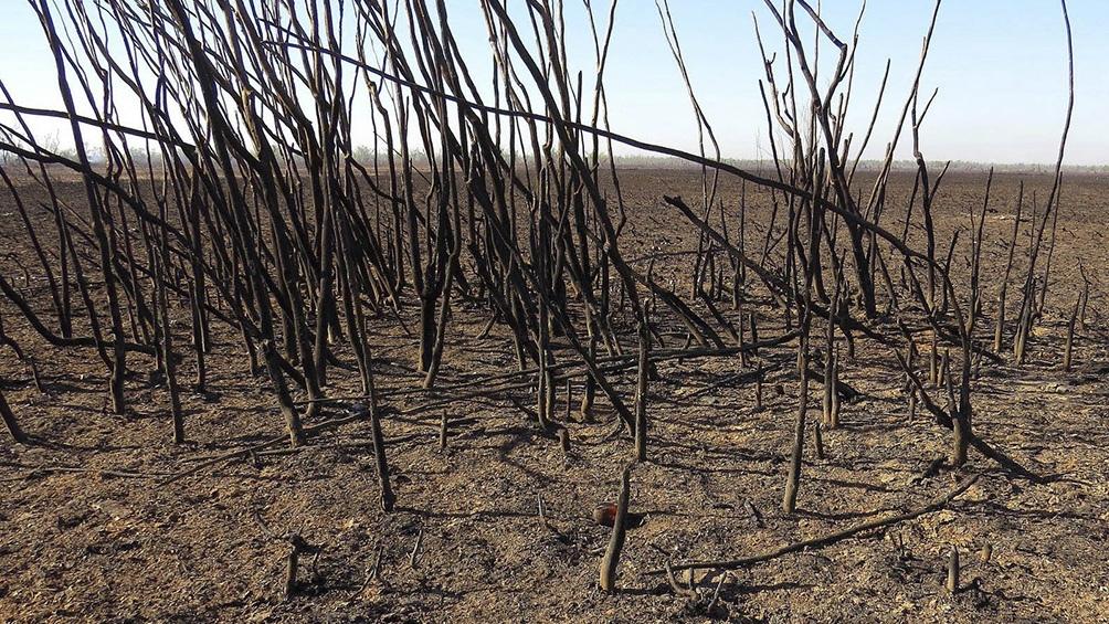 La falta de lluvia contribuyó a la producción de incendios
