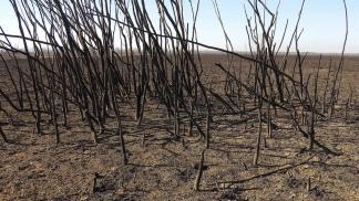 """También se busca """"la reposición del ambiente dañado""""."""