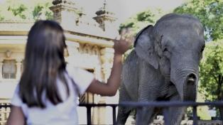 El New York Times rescata la travesía de la elefanta Mara del Ecoparque a Brasil
