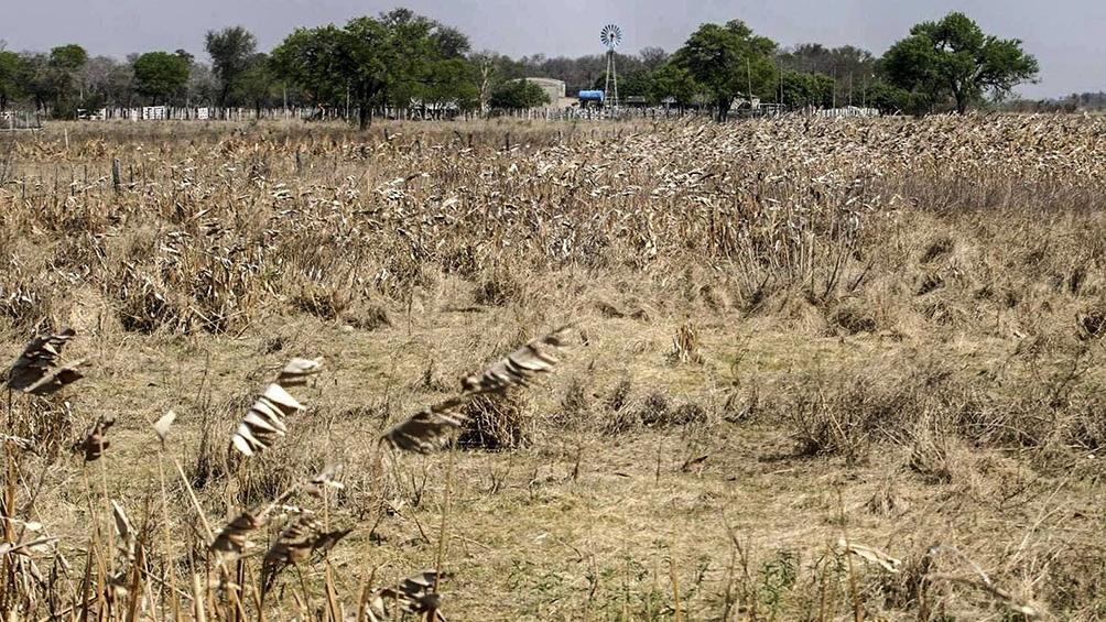 La persistente sequía provoca situaciones tales como el incendio de lotes de trigo en el Estado de Paraná, en Brasil.
