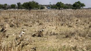 La sequía afecta a la región, en particular a Brasil, con un fuerte impacto productivo