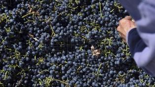 Abren la inscripción para que productores de uva de Mendoza y San Juan exporten a Brasil