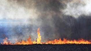 Se registran focos activos en el Delta del Paraná y en el Parque Nacional Ciervo de los Pantanos
