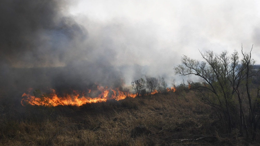 """El informe concluyó que """"el humedal y su biodiversidad están en riesgo"""" ."""