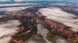 Lanzaron una plataforma para periodistas especializados en temas ambientales