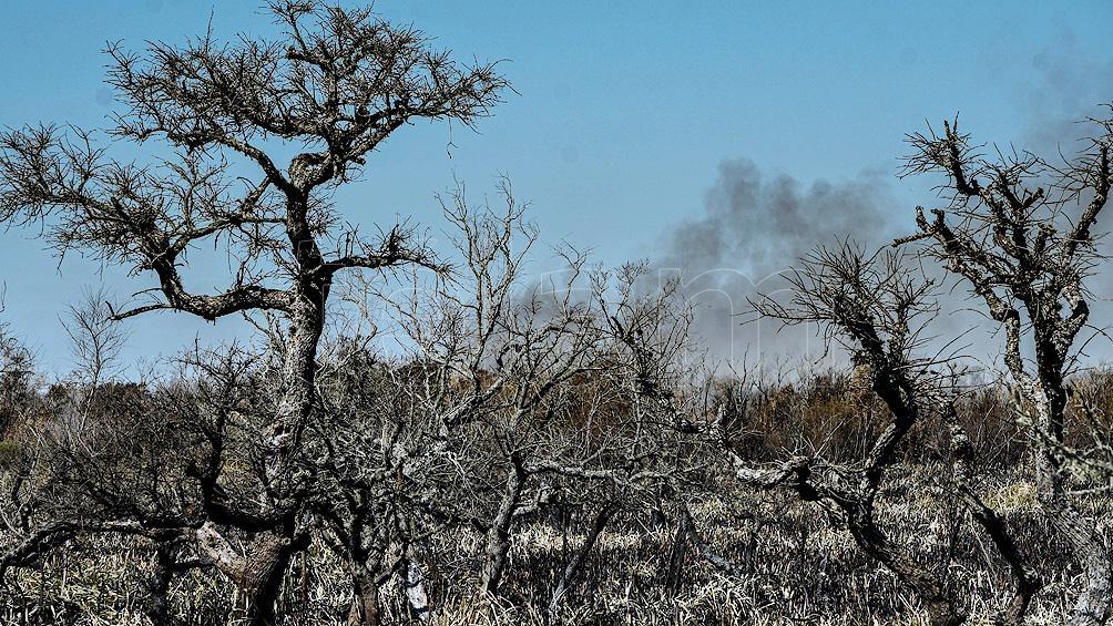 La localidad bonaerense de Berazategui sumó un foco activo de fuego, por lo que son cinco las provincias que continúan afectadas.
